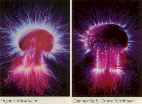 Energy fields around mushroom (Kirlian photography)