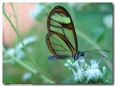 transp butterfly